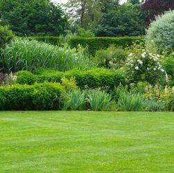 jardin réunionnais