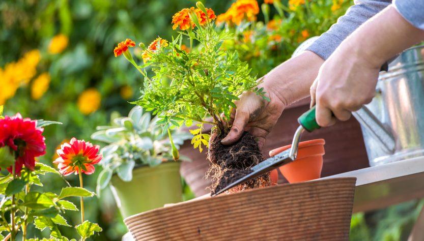jardinières et poteries
